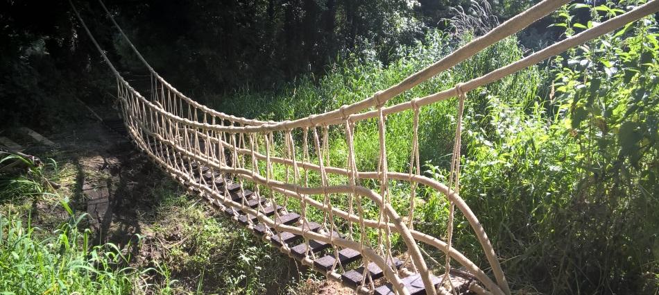 UNE pont de singe
